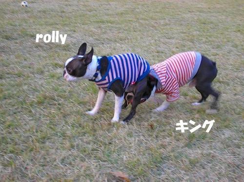 02rolly&キング