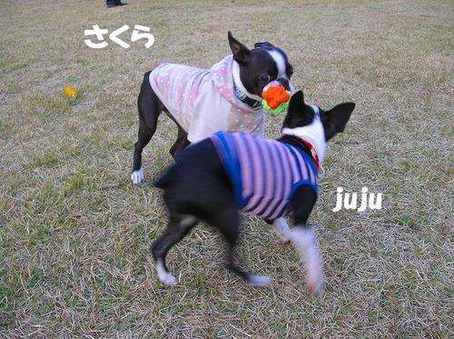04さくら&juju