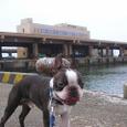 13銚子漁港に来ました。