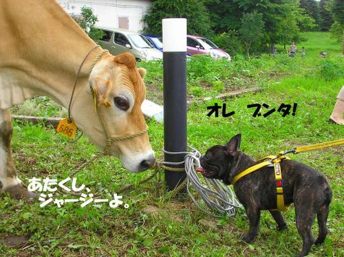11.牛とブンタ