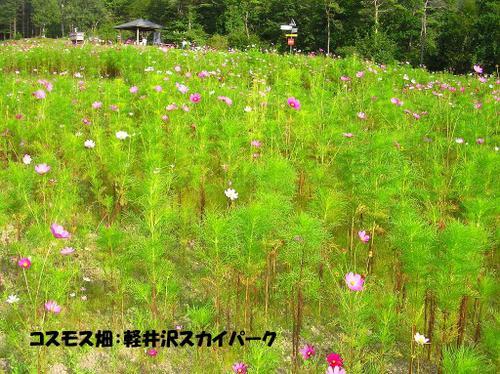 03.軽井沢スカイパーク